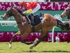 SNOWDEN STABLE TARGETTING WYONG MAGIC MILLIONS 2